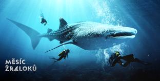 Ponořte se v červenci s NejTV do světových oceánů: Zažijte Měsíc žraloků